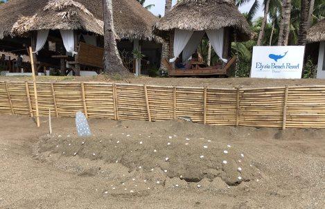 Sand-Walhai