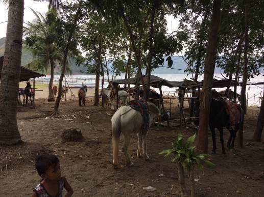 Lake Taal - horseback